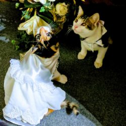 wedding dance kittens