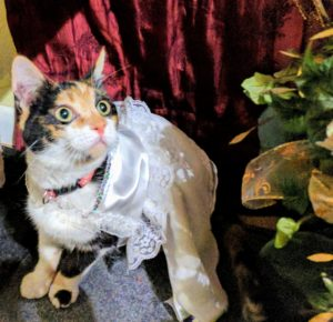 Wedding bride kitten mystery