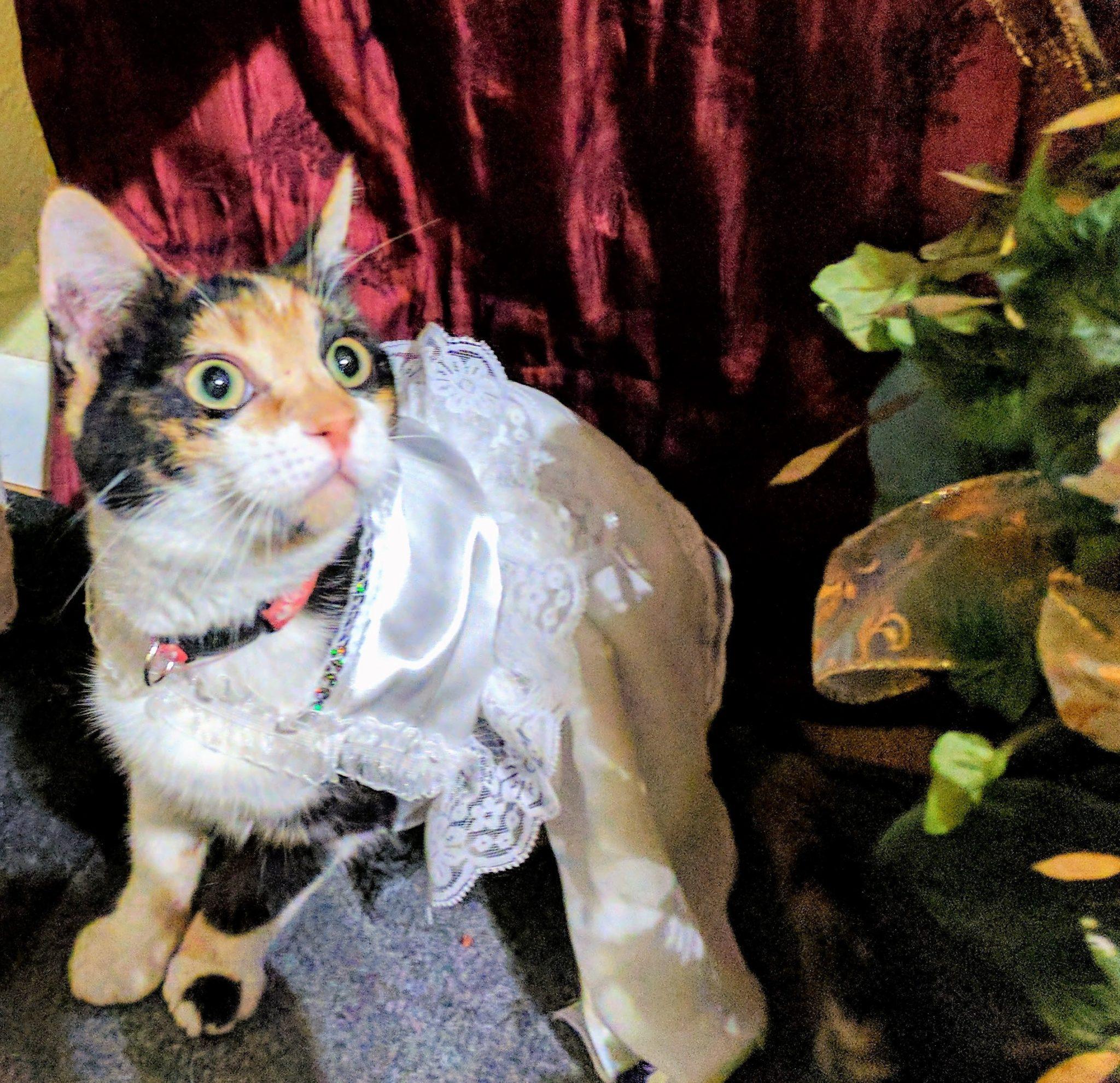 Wedding First Dance Songs 2017: Adventures In Dance