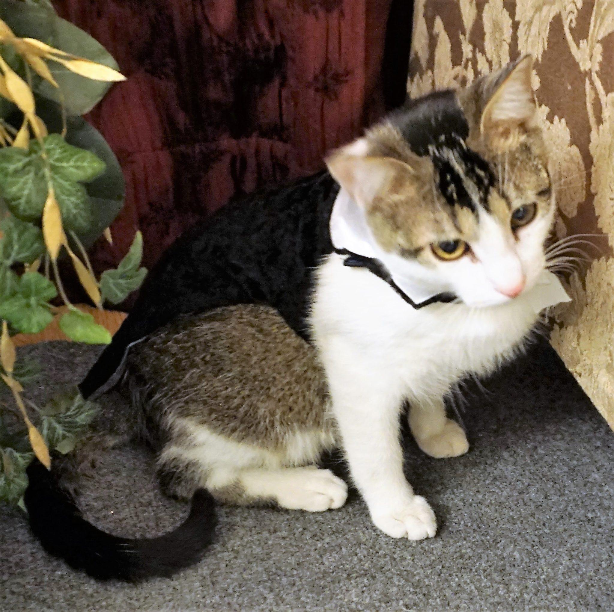 9 cat wedding tips adventures in dance wedding groom kitten sherlock junglespirit Images