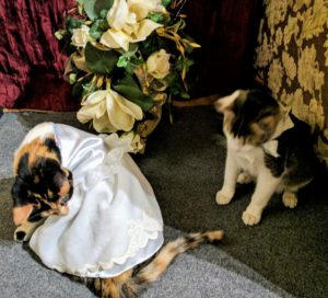 Wedding kittens look