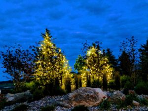 Lit trees Spruce Mountain Ranch Wedding